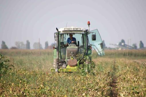 Qualità produzioni agroalimentari, bando regionale da 1,8 milioni di euro