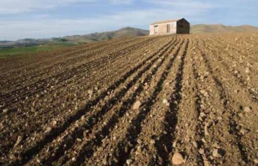 Agricoltura, in arrivo i bandi su misure agroambientali e biologico del Psr Piemonte
