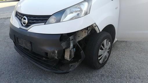 Cervo investito a Bieno, nell'incidente coinvolti un'auto e un furgone