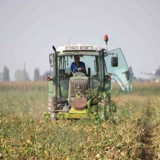"""Gelata Piemonte, l'assessore Protopapa: """"Duro colpo per l'agricoltura, già provata economicamente dalla pandemia"""""""