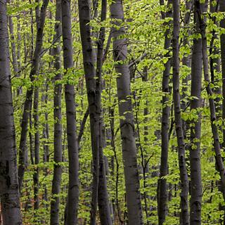"""Il 20 e il21 marzo sul canale Youtube della Regione è possibile vedere """"La via del bosco"""""""