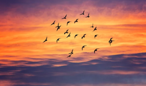 Giornata Mondiale: si celebra il legame tra natura e cultura attraverso la migrazione degli uccelli